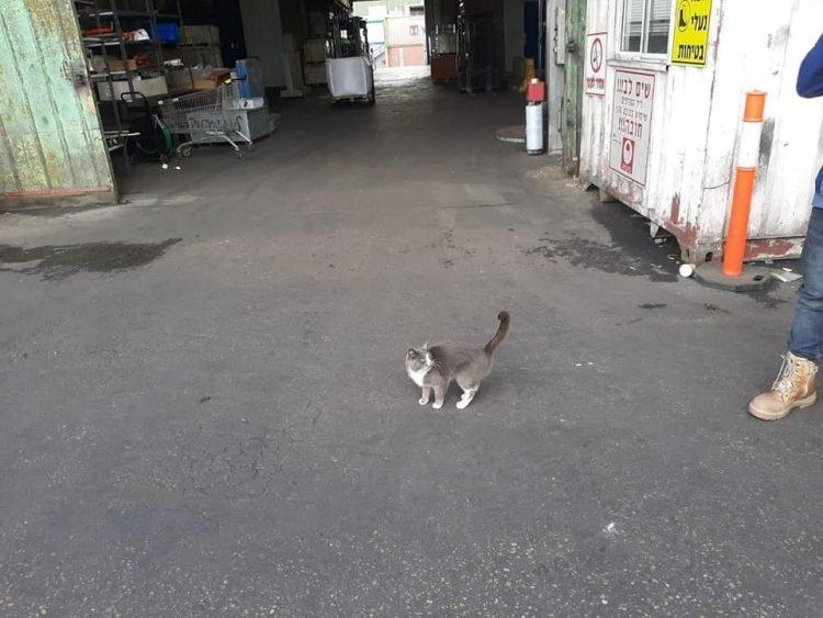 Hi hữu: Mèo sống sót thần kỳ sau 3 tuần bị mắc kẹt trong container