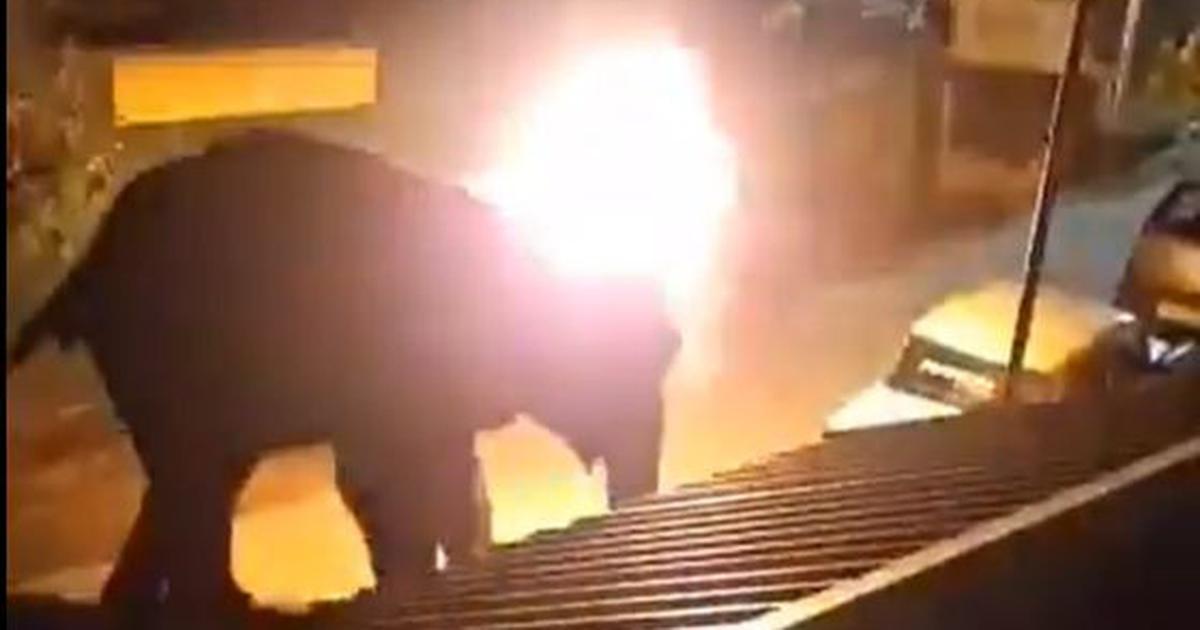ấn độ,voi bị thiêu đốt