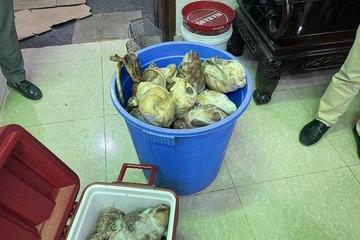 """Nuôi nhốt, cấp đông 17 cá thể tê tê, chủ nhà hàng """"Đệ nhất Văn Quán"""" cùng đầu bếp bị khởi tố"""