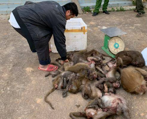 Đắk Lắk: Xử lý đối tượng mua bán 16 cá thể khỉ trái phép