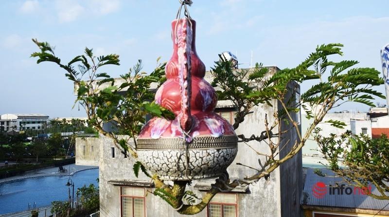 Chơi chẳng giống ai, vườn bonsai mọc ngược xứ Quảng lập kỷ lục Việt Nam