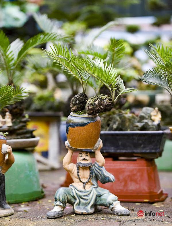 Vạn tuế mini bonsai chục triệu đồng hút khách dịp Tết của nghệ nhân Hà thành