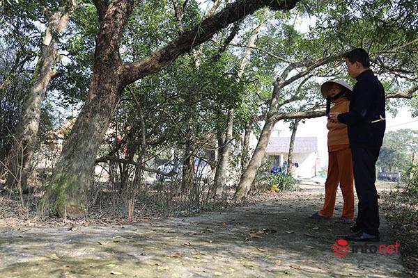 Ngôi làng có nghìn cây lộc vừng trên 300 tuổi, dân chơi trả giá nào cũng không mua được