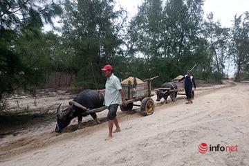 Người dân ven biển khai thác cát sỏi mưu sinh nhờ những chiếc xe trâu