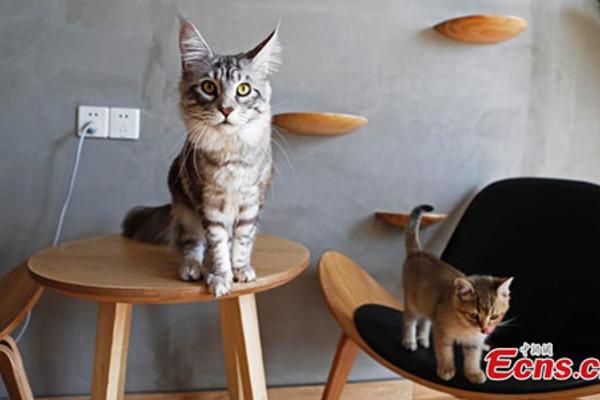 Trung Quốc dẹp bỏ khu chợ mổ xẻ và bán thịt mèo