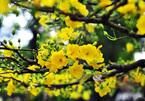 Những loài hoa trưng Tết mang vượng khí rước tài lộc vào nhà