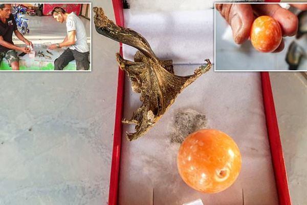 Viên ngọc trai màu cam quý hiếm trị giá gần 8 tỉ đồng