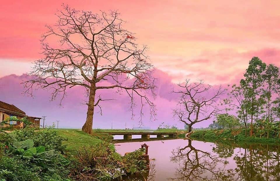 Hàng cây hoa gạo hiếm có tại thôn Đoan Nữ khắc họa hồn quê trong trẻo, yên bình