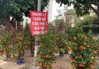 Quất, hoa cảnh Tết thanh lý giá nào cũng bán, khách mua vắng bóng