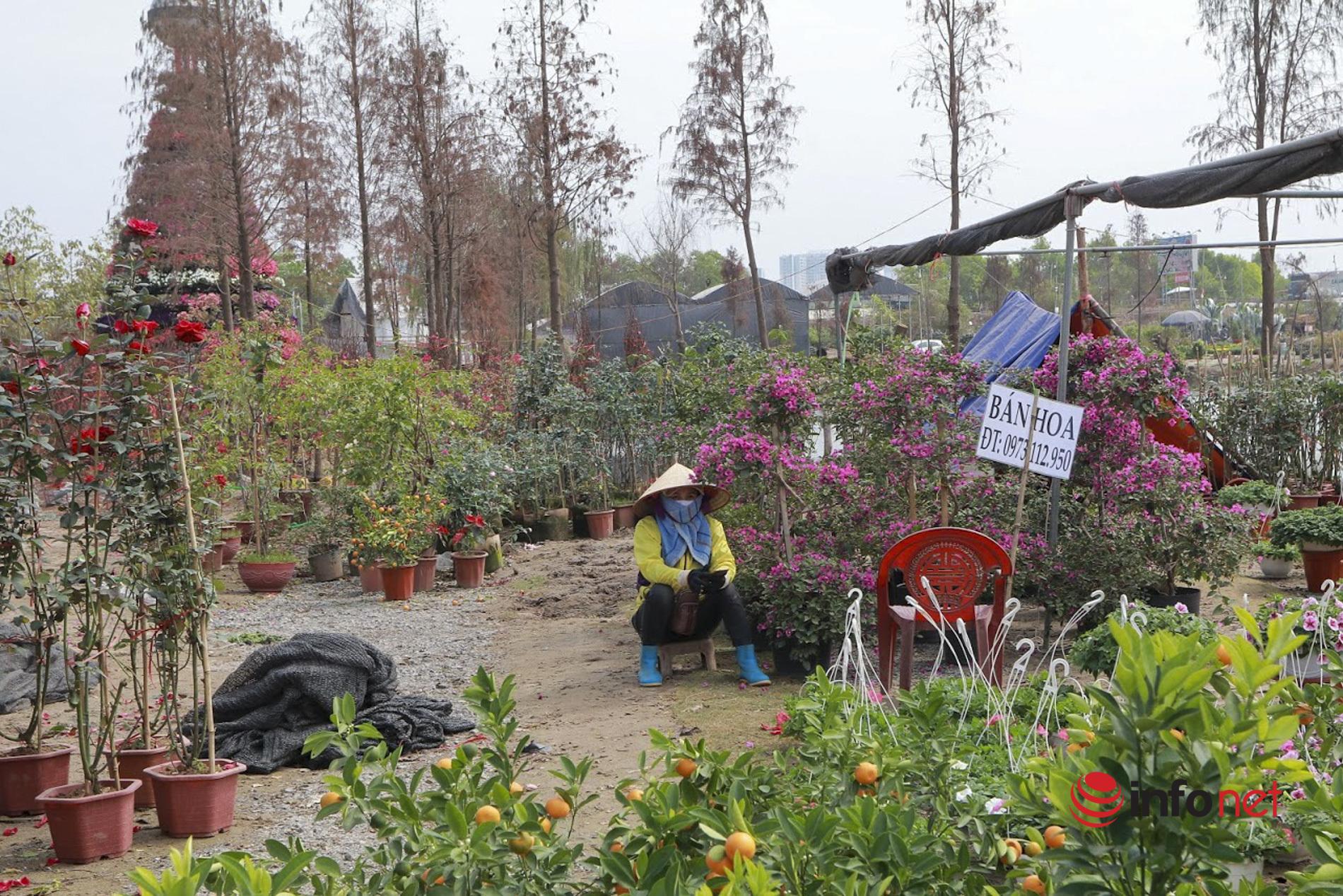 Chủ vườn lỗ tiền tỷ vì khách 'bùng' đơn, hoa ngoại ế hiu hắt