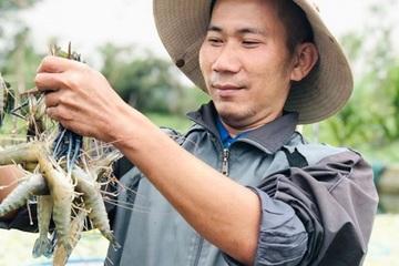Chàng trai khuyết tật vùng biển về Bình Dương nuôi tôm càng xanh nước ngọt ở gò đồi