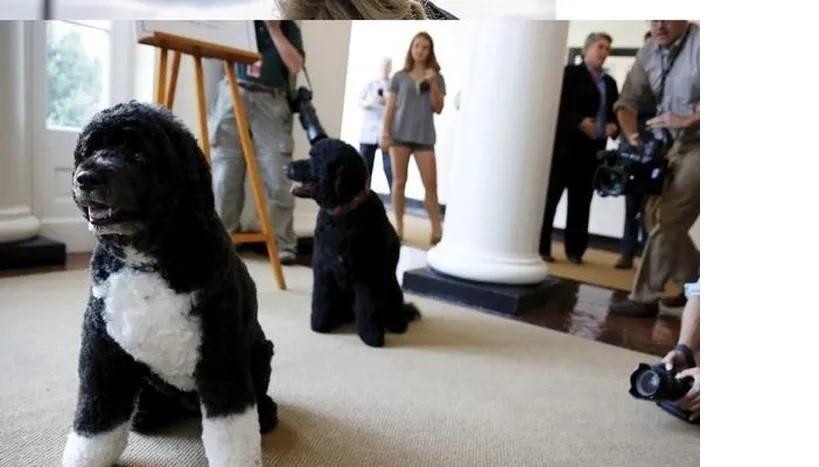 Những chú chó giúp hình ảnh Tổng thống Mỹ trở nên gần gũi hơn