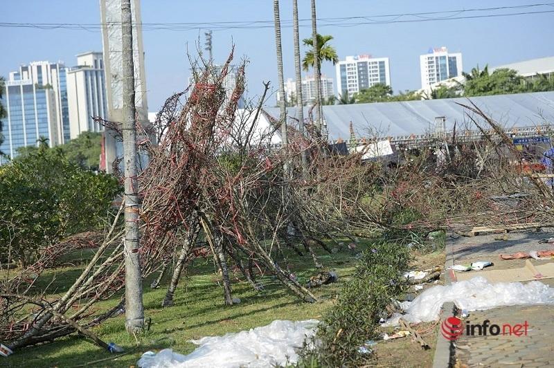 Chiều 30 Tết, 'đào rừng' dán tem chất đống như củi khô bên vệ đường Hà Nội