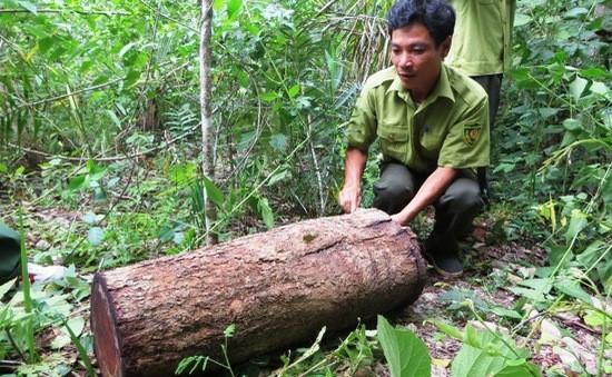 phá rừng,căm xe,Ea Ka,Ea Sô,Đắk Lắk