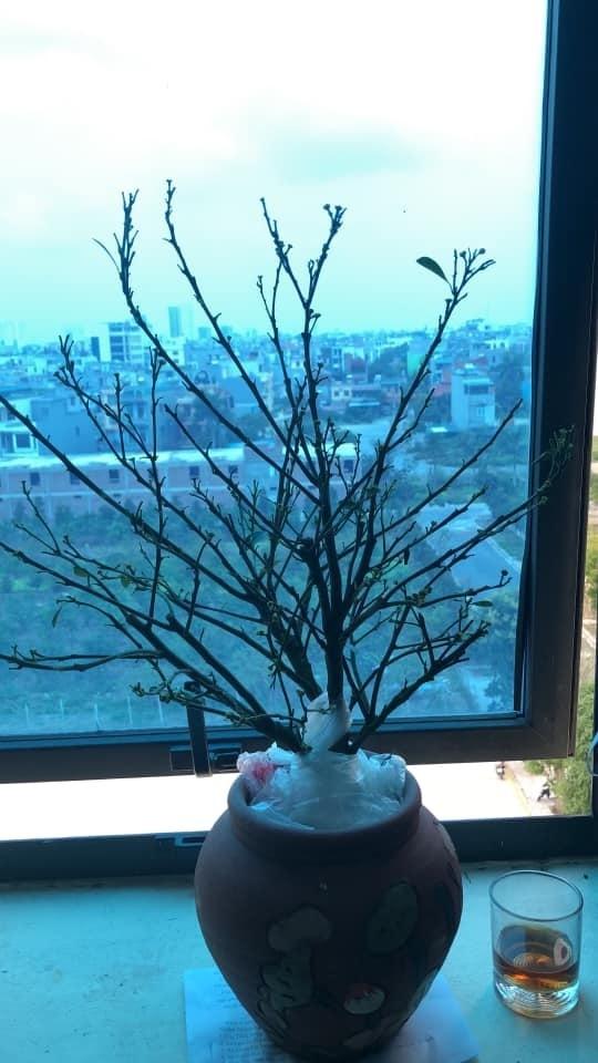 Những cây quất tàn tạ thê thảm sau Tết, chăm sóc phục hồi thế nào?