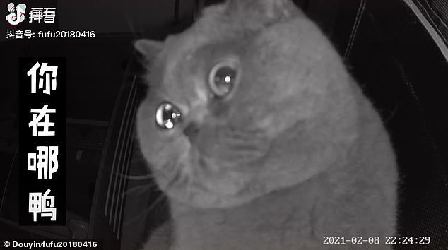 Mèo cưng rơi nước mắt hướng thẳng nhìn camera khi chủ nhân rời đi