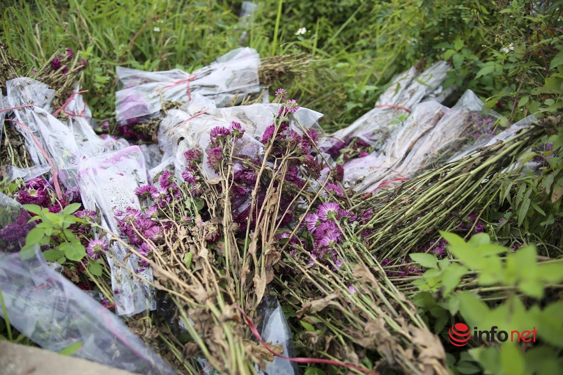 Làng trồng hoa nổi tiếng ở Hà Nội ế ẩm, dân khóc ròng cắt hoa vứt đầy ruộng