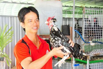 Nuôi loại gà Quý Phi cùng chim trĩ, mỗi năm chàng thanh niên miền Tây thu hàng trăm triệu