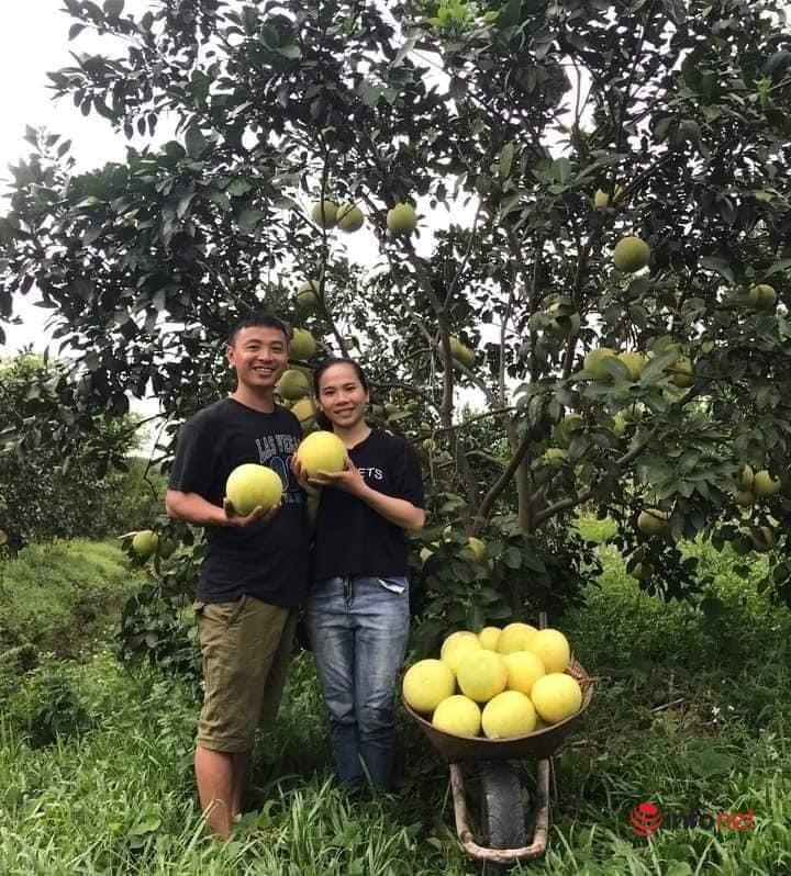 Về quê, bán hết vàng cưới, cặp vợ chồng trẻ trồng bưởi sinh thái, nuôi ong làm giàu