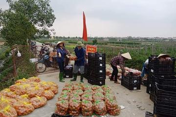 """Tránh lợi dụng """"giải cứu"""" ép giá nông dân, Hải Dương công bố giá bán nông sản"""