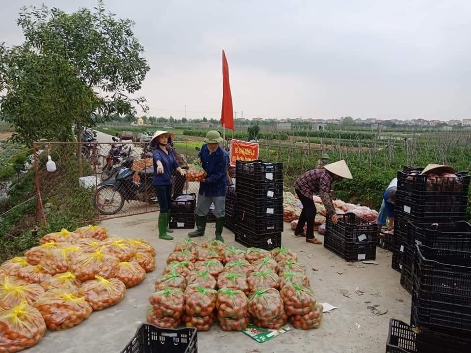 Nông sản Hải Dương,Giải cứu nông sản,Dịch Covid-19
