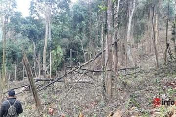 Hà Tĩnh: Hàng trăm hecta rừng phòng hộ bị chủ rừng ẩn danh 'cạo trắng'