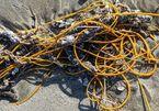 Sinh vật lạ ngoài đời thực giống 'đống dây thừng' nằm trên bãi biển
