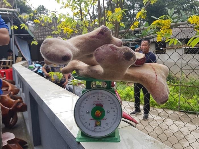 Hà Tĩnh: Khách trả 250 triệu một con hươu, chủ không bán vì lý do đặc biệt