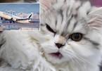 Máy bay khẩn cấp quay đầu về sân bay vì phi công bị mèo tấn công