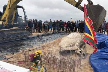 Quảng Bình: Cá voi nặng gần 1 tấn trôi dạt vào bờ biển được chôn cất chu đáo