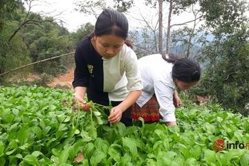 Ngôi trường có 2.000m2 đất cho học sinh trồng hàng tấn rau xanh