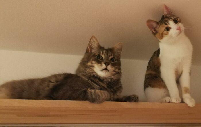 Bí mật đằng sau bức ảnh 'mèo mất đầu' vẫn sống bình thường