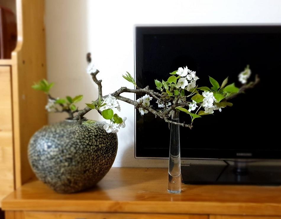 hoa lê và hoa mắc cọp