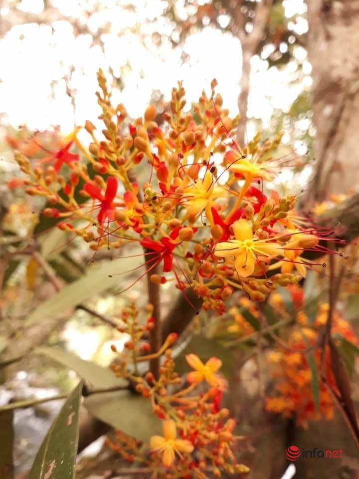 Phong Nha-Kẻ Bàng,Suối Nước Moọc,Sông Chày-Hang Tối,Hoa vàng anh