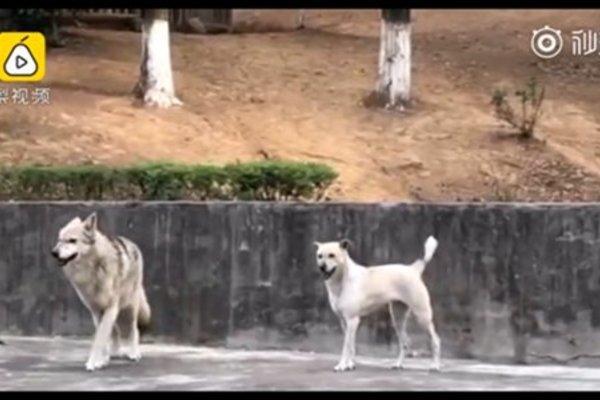 Sở thú ở Trung Quốc dùng 'đồ giả' lừa du khách gây phẫn nộ