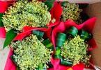 Ruộng su lơ nở hoa vàng rực tưởng phải vứt bỏ, nhưng sự sáng tạo bất ngờ giúp anh nông dân Hải Dương thu tiền triệu