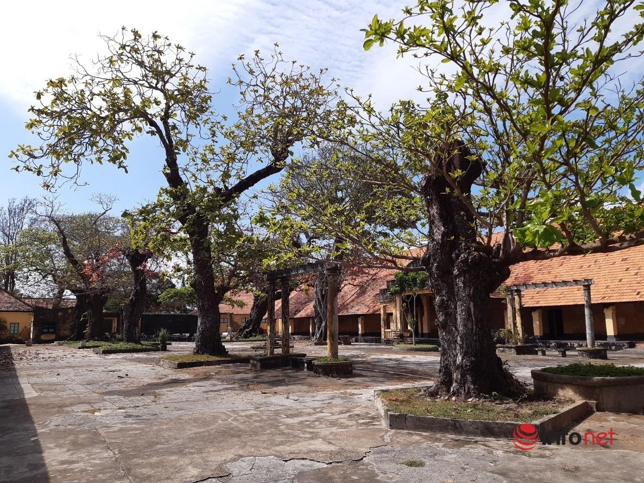Cây bàng Côn Đảo,Cây di sản,Bà Rịa Vũng Tàu