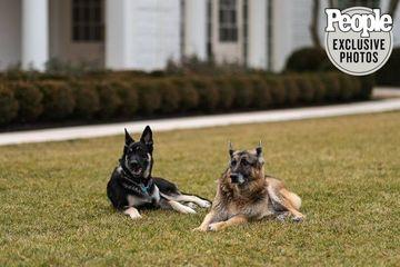 Chó cưng của ông Biden cắn nhân viên bảo vệ Nhà Trắng