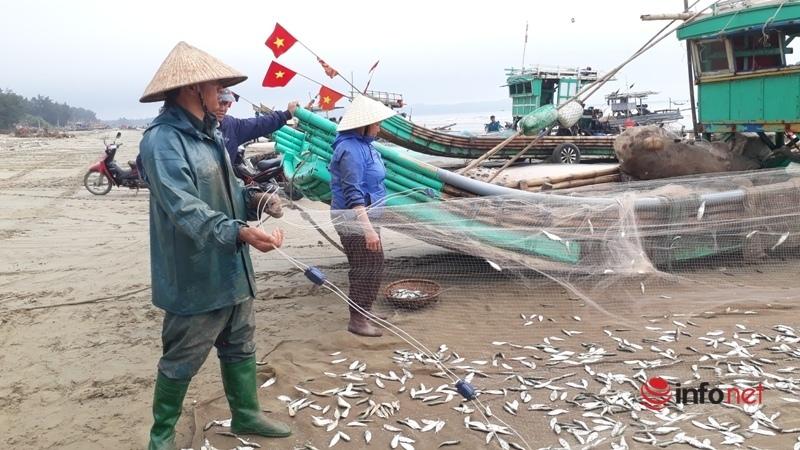 Rộn ràng mùa cá trích ở xứ Thanh