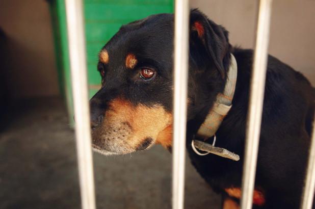 Sở thú Trung Quốc gây phẫn nộ vì biến chó nhà thành sói dữ