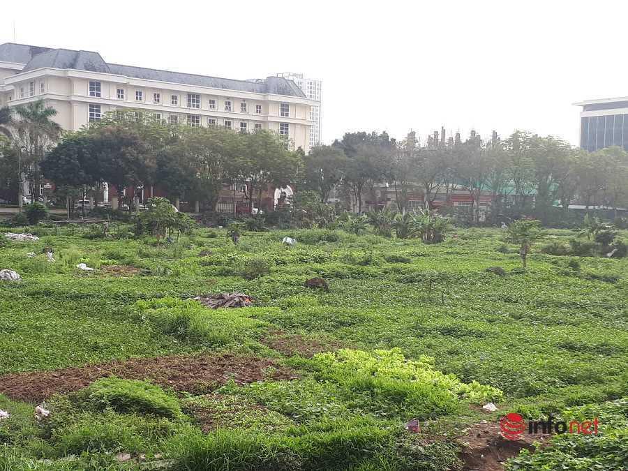 Rác thải bủa vây dự án nghìn tỷ 'đắp chiếu' hàng chục năm, dân tận dụng trồng rau