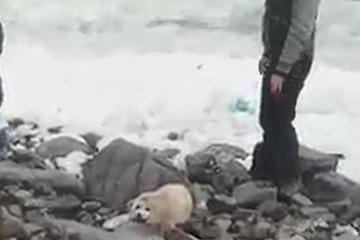 Hải cẩu chết thảm sau khi 'nổi tiếng' quá mức