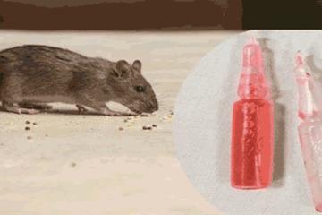 Cãi nhau với vợ, người đàn ông uống thuốc diệt chuột bị cấm cách đây 20 năm