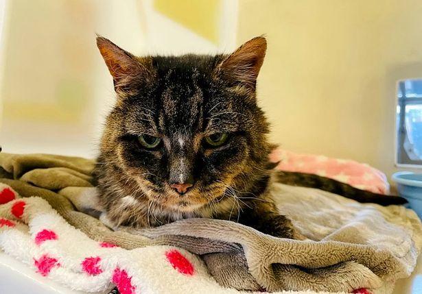 Mèo cưng quay trở về tìm chủ cũ sau 20 năm mất tích và cái kết bất ngờ