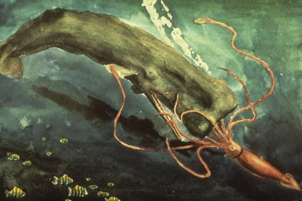 Cuộc chạm trán giữa cá voi nhà táng và mực khổng lồ