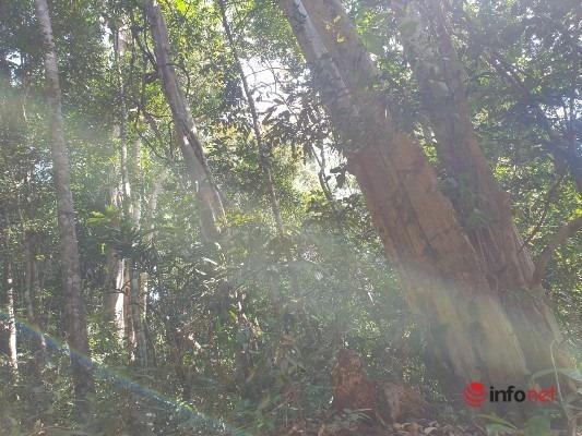 Xây dựng bậc thang thủy điện Đắk R'lấp 1,2,3 sẽ mất hàng trăm hecta rừng giàu tài nguyên