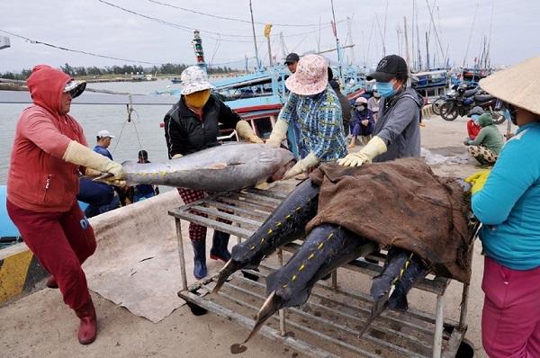 Ngư dân Phú Yên vẫn ra khơi, đón Tết trên biển