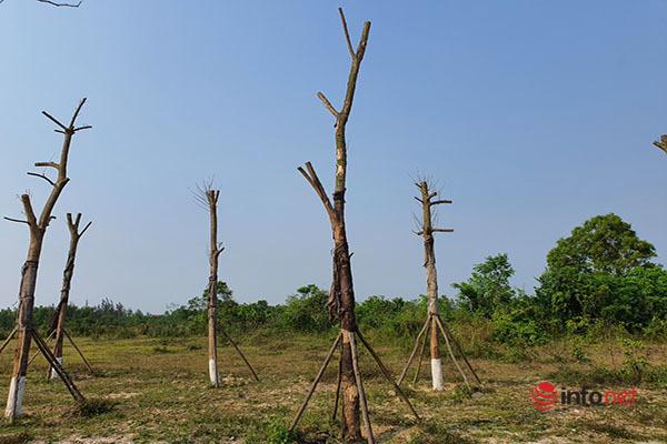 Rác vương vãi ở cửa ngõ phía Nam TP Huế, hàng cây xanh tiền tỷ tróc vỏ chết khô