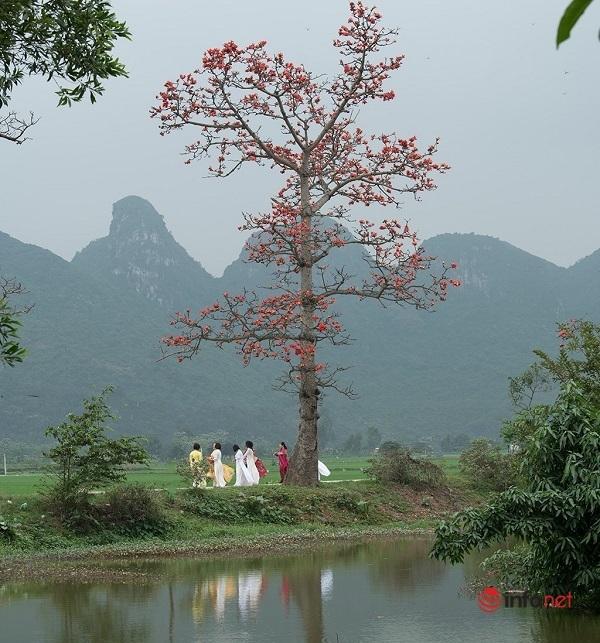 Hoa gạo bung nở giữa làng quê thanh bình ven Hà Nội