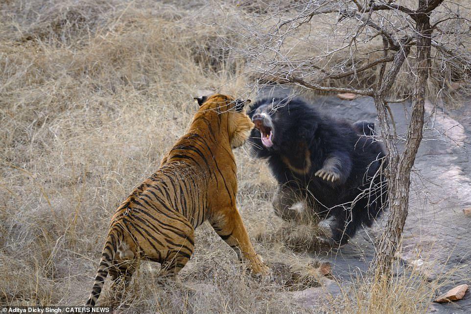 thế giới động vật,ấn độ